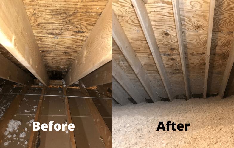 mold removal green attic